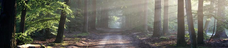 森林之光8,04