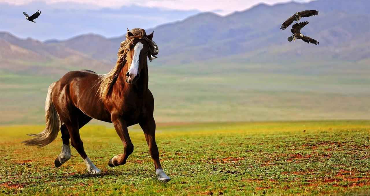 生肖運勢分析—屬馬的人