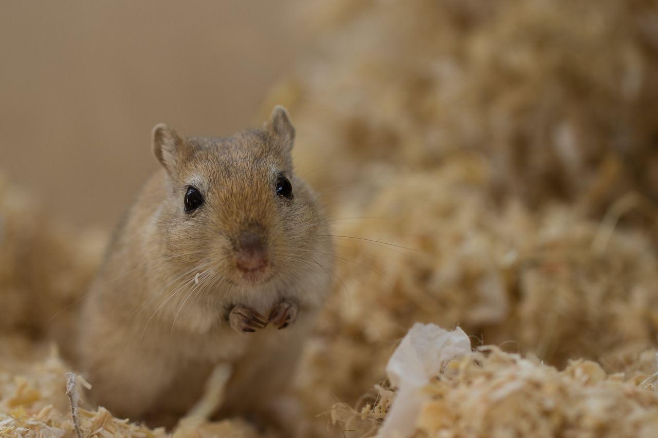 十二生肖屬鼠108年運勢分析