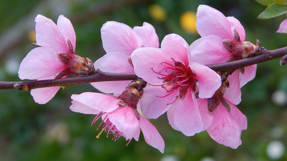 化解爛桃花的風水秘訣